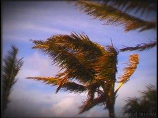 Streaming porn video still #9 from Island Fever